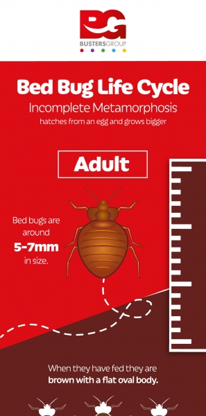 bed-bugs-info-graphic_approved